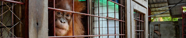 Indonesian Illegal Pet Trade
