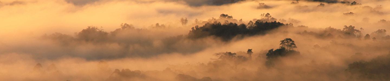 Papua Rainforests