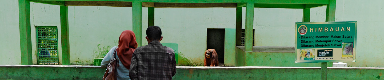 Pongky-Medan Zoo