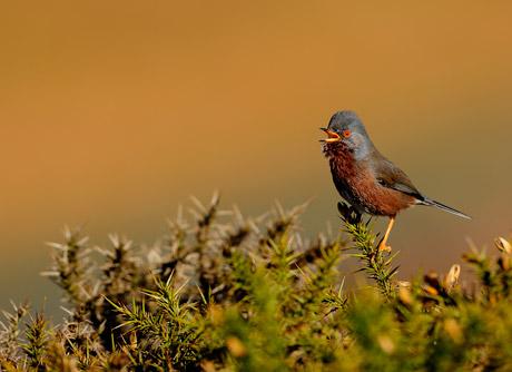 Singing Dartford