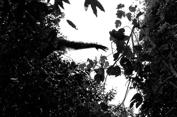 Passing Through The Jungle
