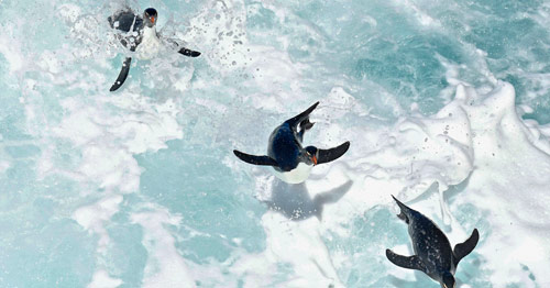 Synchronised Penguins