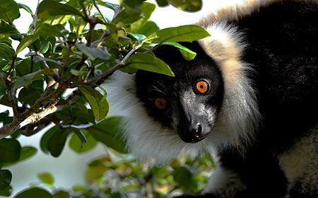 Private,bespoke Wildlife Safaris