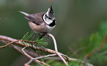 Scottish Winter Wildlife 2021