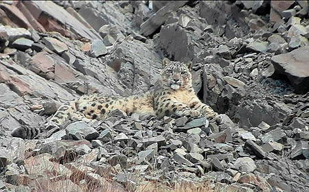 Snow Leopard Expedition 2020