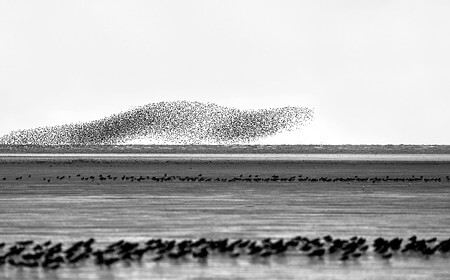 Winter Waders Norfolk 2021